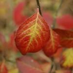 Sersheim Herbstansichten - Foto Susanne Horizon Fränzel